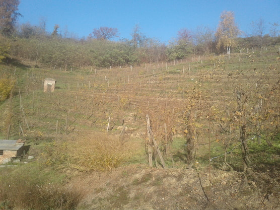 Vineyard at Villa Era, Alto Piemonte
